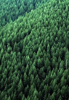 Bäume-pflanzen