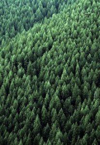 Bäume-Kachel