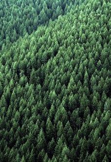 2.500 Bäume gepflanzt